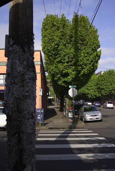 Street shot NW Portland