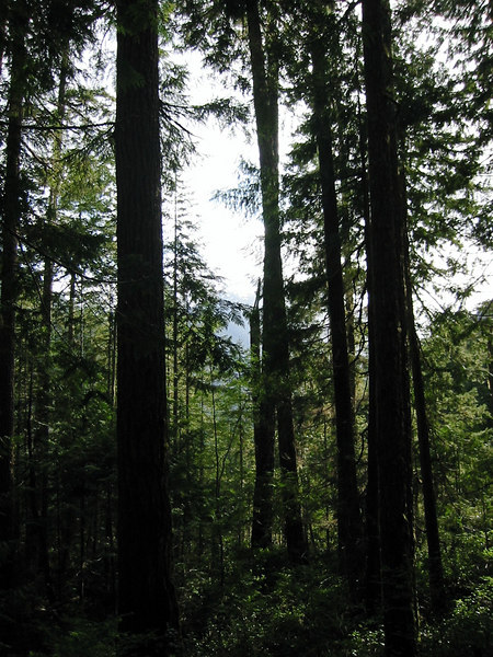Olympic National Park.  I was trying to get a shot of the mountain in the distance, but the trees were so dense that it fooled the auto-focus on my camera.