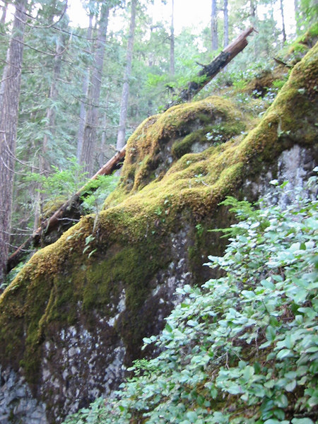 Olympic National Park.  Lots of moss everywhere.