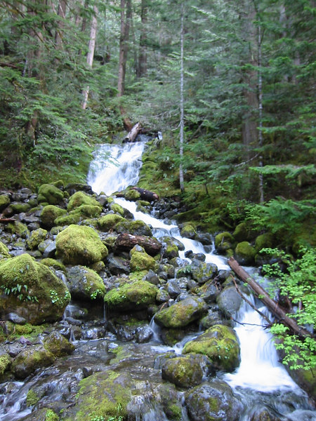 Olympic National Park.  Cascade