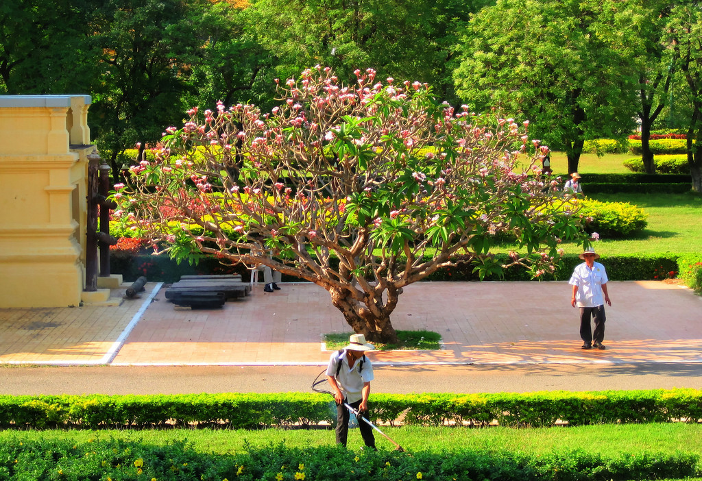 Tree and workers at Imperial Palace, Cambodia.