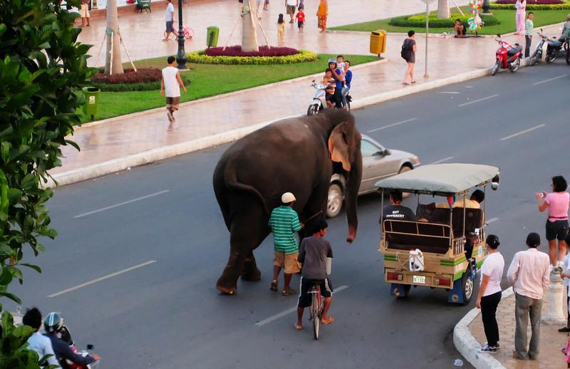 Elephant in Phnom Penh Cambodia