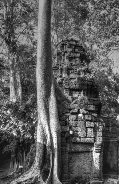 Ta Prohm, Cambodia.