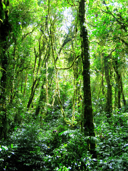 Cloud forest Costa Rica