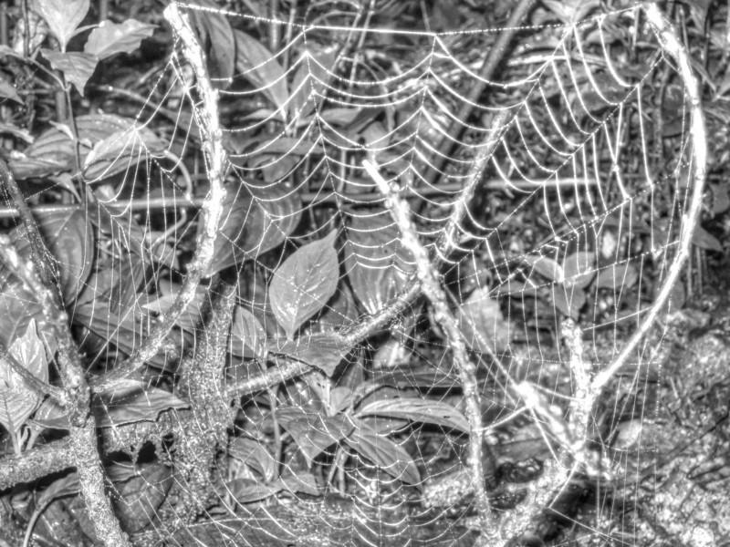 Spider web Costa Rica