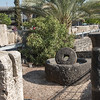 Olive Press, Capernaum
