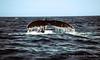 Whale Tale - Off the Newfoundland Coast