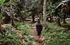 Village Walk in Papua New Guinea 2008