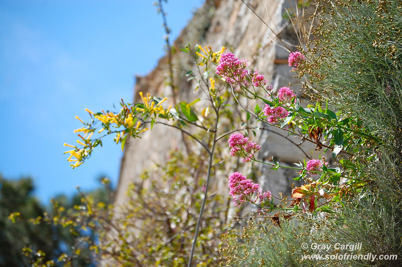Flowers on Le Suquet