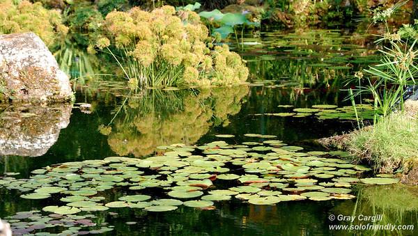 Lily Pond