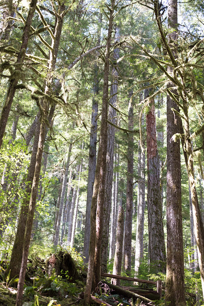Forest near Crescent Lake