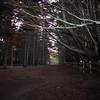 Fitzgerald Marine Sanctuary Trees