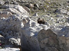 The local marmot keeps track of our progress on the way down.. (Photo: Elise Fernley)