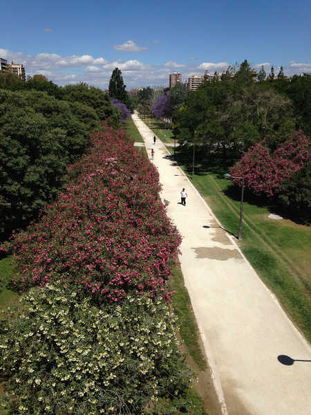 One of the most interesting things about the city is the urban park that has been built in the dry bed of the Turia River. After a flood in 1957 that damaged much of the city, the Río Turia was diverted, now passing around the southern and western suburbs of the city. The former river bed wrapping around the northern and eastern rim of historical Valencia, is now an urban park that stretches for 10 kilometers.