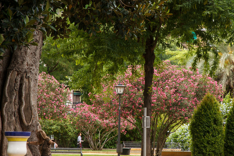 Sevilla is a beautiful city full of parks and gardens.