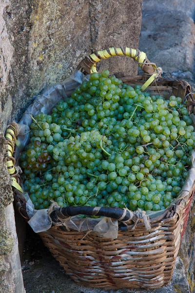 September is harvest time and we saw lots of grapes being harvested . . .