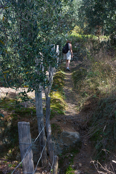 We wanted to get a view of the sea, so we followed a small path through an olive grove  . . .