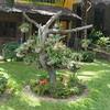 dead tree put to use, next to the SunShine Resort, Mui Ne