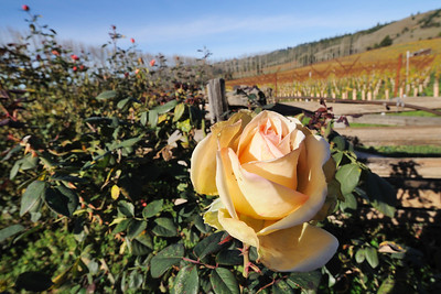 Anderson Valley, November 22-25