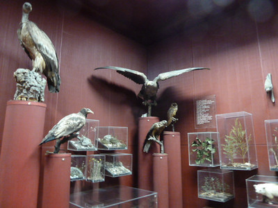 National Museum of Ethnography and Natural History