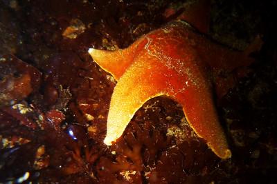 Monterey, March 10-11, 2012