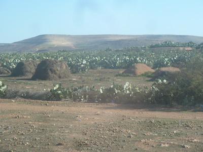 Morocco: Fez (2012)