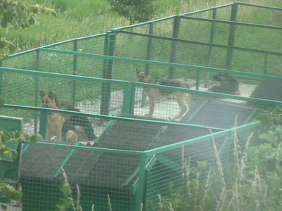German shepherds in kennels at Ukraine/Poland border
