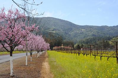 Napa Valley, March 3, 2013