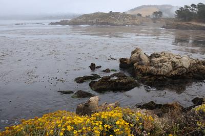 Point Lobos, California, June 23 2013
