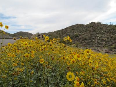 Arizona Wildflowers 2012