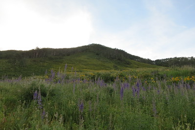 IMG_0011 Brush Creek Trail Crested Butte CO