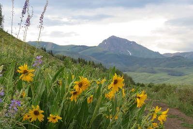 IMG_0019 Brush Creek Trail Crested Butte CO