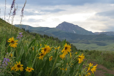 IMG_0020 Brush Creek Trail Crested Butte CO