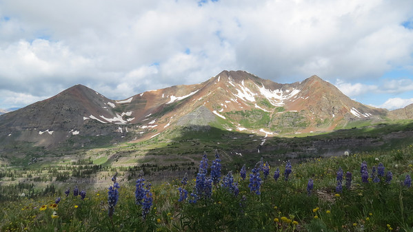 Colorado Wildflower Capital of Colorado at Crested Butte