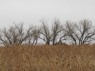 IMG_8921 Norton, Kansas Wildlife Area