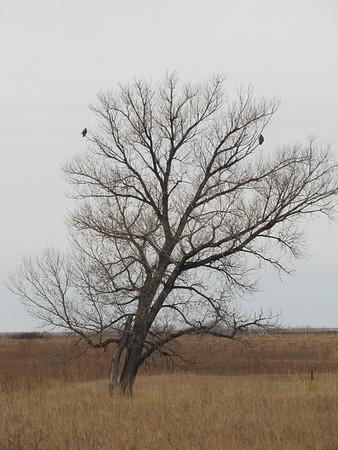 IMG _8922 Norton, Kansas Wildlife Area