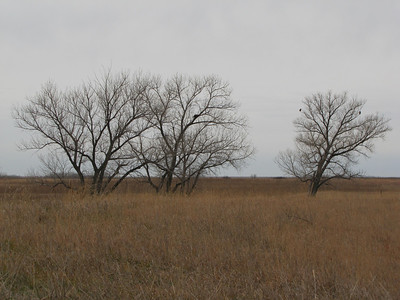 IMG_8923 Norton, Kansas Wildlife Area