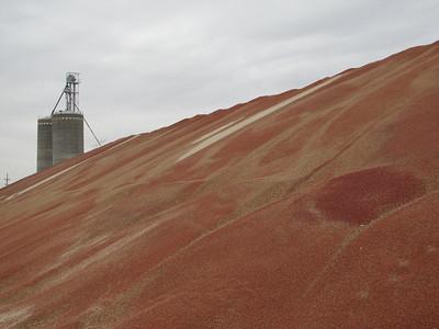 IMG_ 8934 Dresden, Kansas Milo Mountain