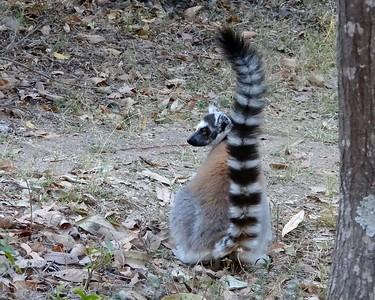 Madagascar Videos