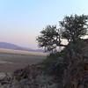 bush highlight test desert homestead