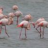 Flamingos Walvis Bay_003