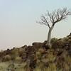 baobob desert homestead namibia_1169