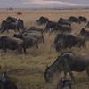 Ngorongoro Serengeti geo_0330