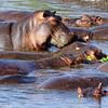 Hippo pond (Joel)