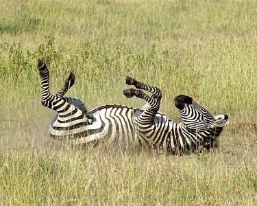 Tanzania 2015 Safari Favorites
