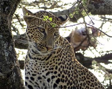 Tanzania 2015 Safari