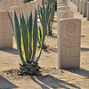 Cactus Palm Plants and Headstones