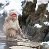Snow Monkey relaxing | Japan