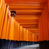 Beyond the Torii Gates | Kyoto, Japan