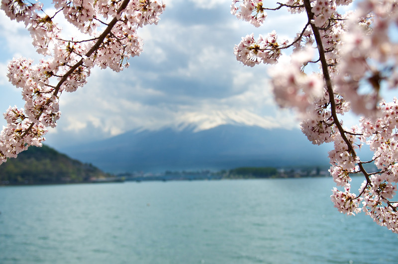 Sakura and Mt Fuji | Japan